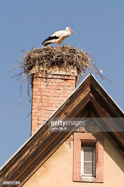 Storks nesting on house