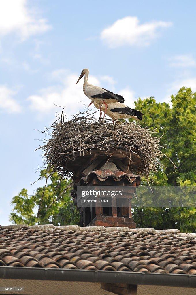 Storks : Stock Photo