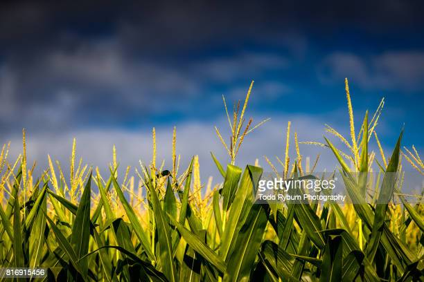 storm a coming - tassel stock pictures, royalty-free photos & images