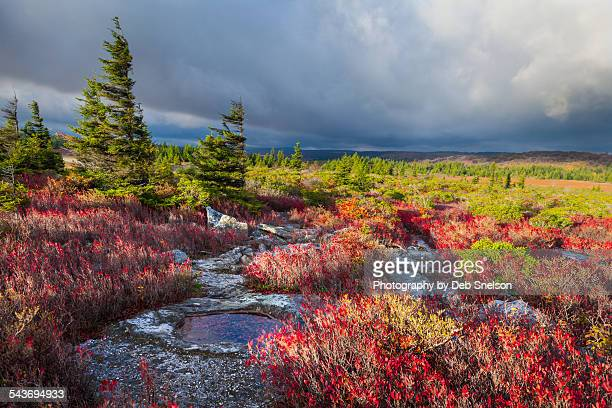 storm approaching bear rocks - monongahela national forest stock photos and pictures
