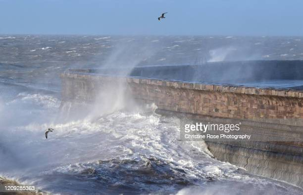 storm birds - whitehaven cumbria stock pictures, royalty-free photos & images