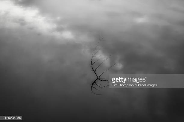 storm clouds and branch reflected in pond - calm before the storm stock pictures, royalty-free photos & images