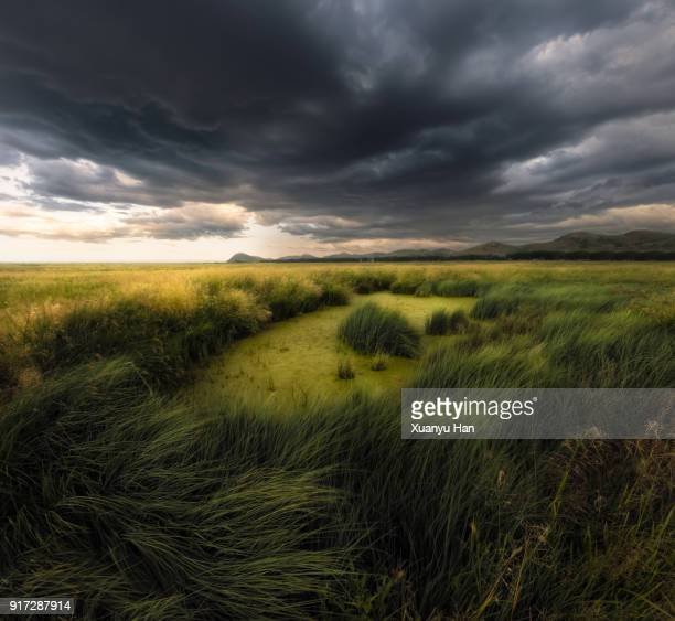 storm clouds and wetlands - sumpmark bildbanksfoton och bilder