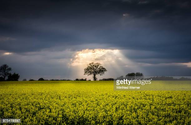 storm clouds over field - wetter stock-fotos und bilder