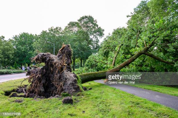 Storm damage after a heavy summer thunderstorm on June 18, 2021 in Kampen, The Netherlands. Trees fell down on roads and houses and parked cars...