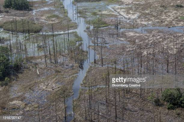 storm damage after hurricane florence - 2018 hurricane florence stock pictures, royalty-free photos & images