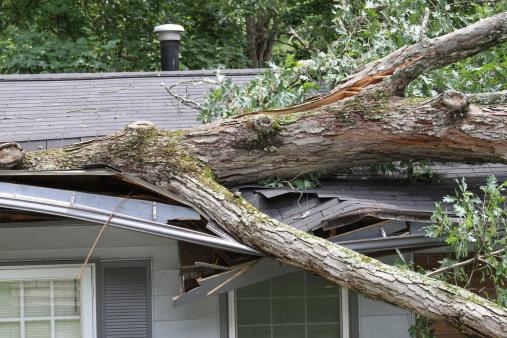 Storm Damage 119162012