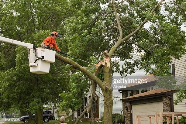 Storm damaged tree gets cut
