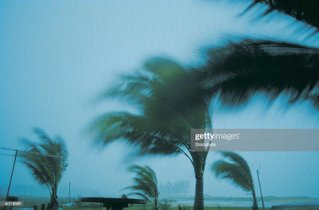 Storm damage,Phuket Island : Stock Photo