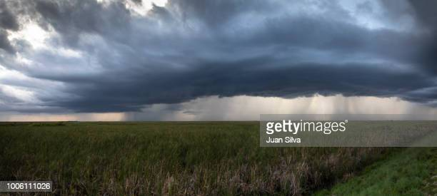 storm in the horizon, everglades national park, florida, usa - coral springs stock pictures, royalty-free photos & images