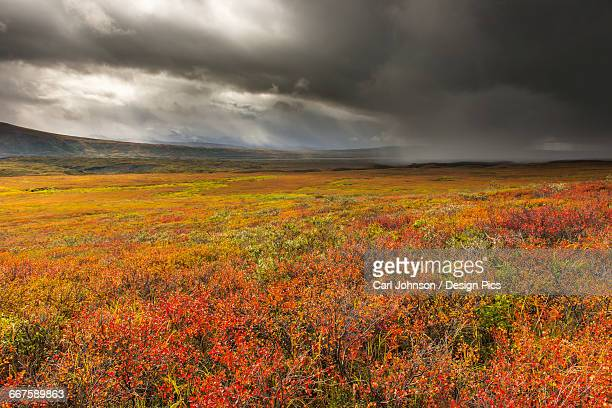 A storm passes over the bright colors of autumn in Denali National Park & Preserve, Alaska.