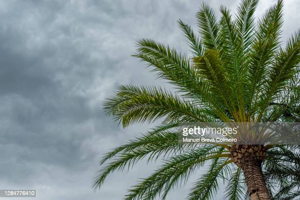 storm - benicassim stock pictures, royalty-free photos & images