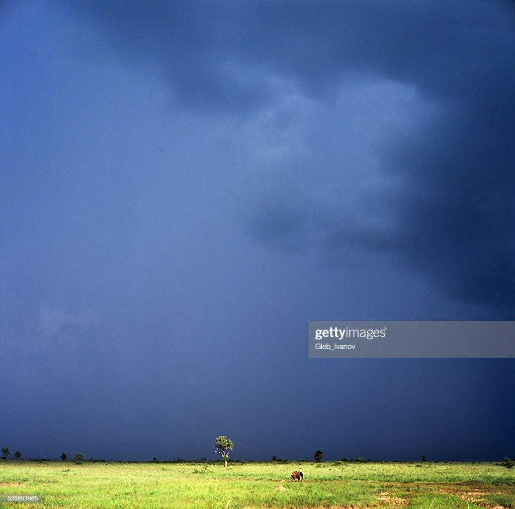 Storm : Stock Photo