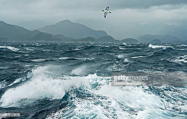 storm sea - animals in the wild stock photos and pictures
