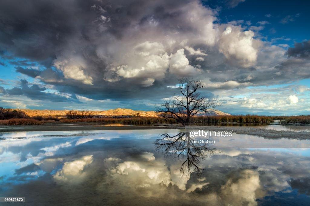 Storm Tree : Stock Photo