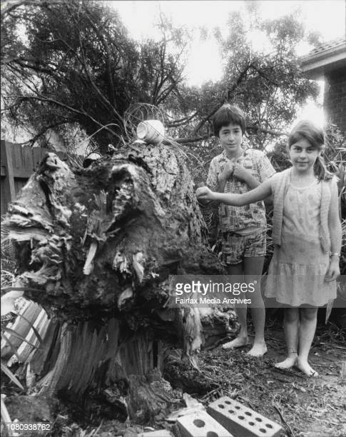 StormDenise Palmer and brother Alex with the gumtree which snapped off in their yard and crushed the side of the home of their neighbour during last...