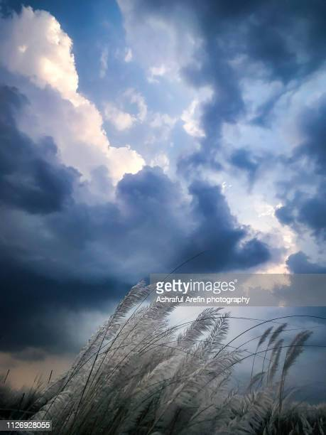 stormy clouds and wind - bangladeshi flowers stock pictures, royalty-free photos & images