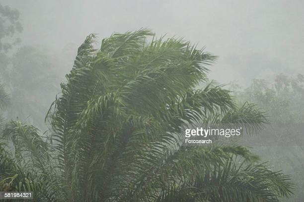 stormy day - kamerun stock-fotos und bilder
