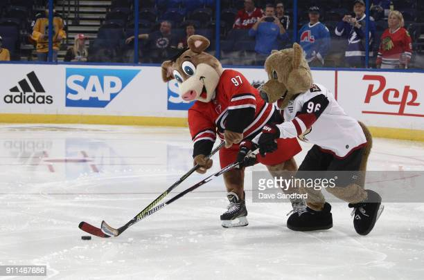 Stormy of the Carolina Hurricanes and Howler the Coyote of the Arizona Coyotes vie for the puck during the PreGame Mascot Showdown at Amalie Arena on...