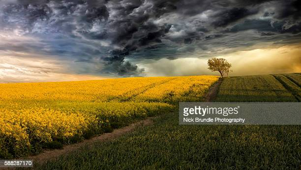 stormy weather - canola oil stock pictures, royalty-free photos & images