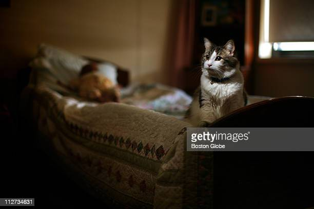 Story on Oscar the Cat who roams the halls of the Steere House Nursing and Rehabilitation Center in Providence RI has an uncanny knack to tell when a...