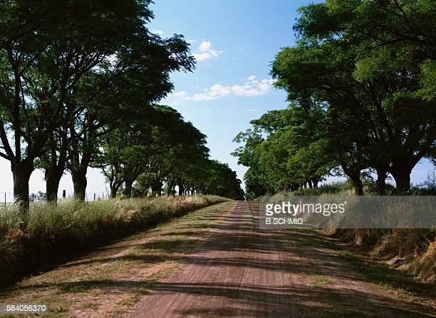 Straight Dirt Road With Trees, San Antonio De Areco, Argentins