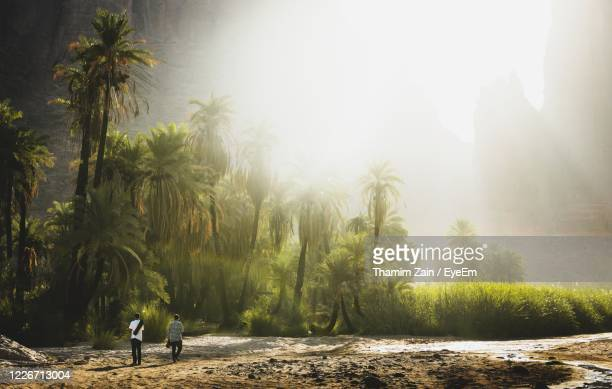 straight out of jurassic park - saudi arabia stock pictures, royalty-free photos & images