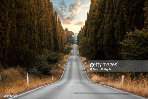 straight road among cypress trees - bumpy stock pictures, royalty-free photos & images