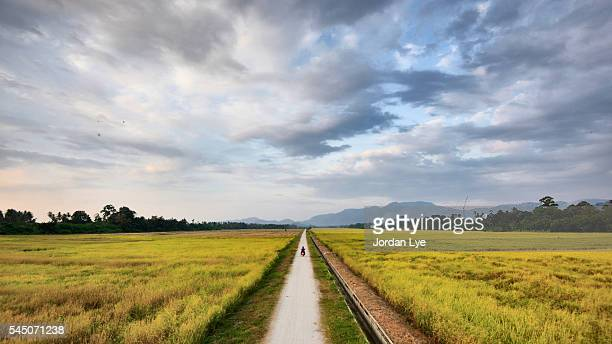 Straight road in rice field