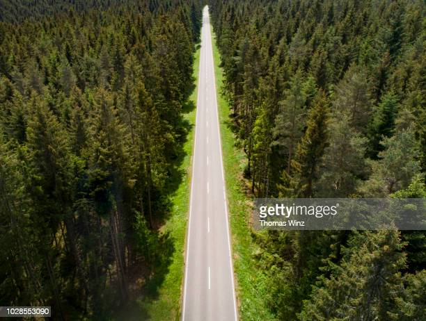 straight road through a forest - straight stock pictures, royalty-free photos & images