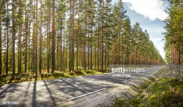straight road through forest - forest road stock pictures, royalty-free photos & images