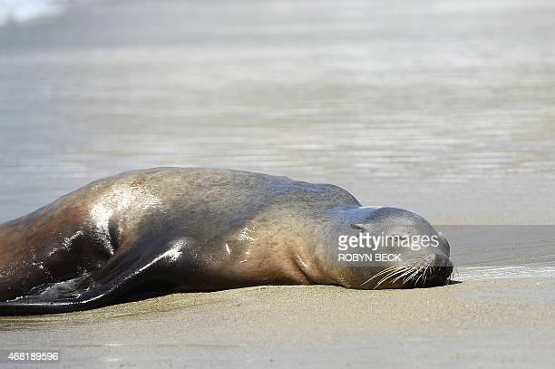 Adult dating in laguna california
