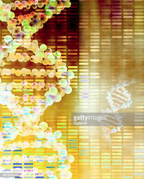 DNA Strands and Karyotype Sheet