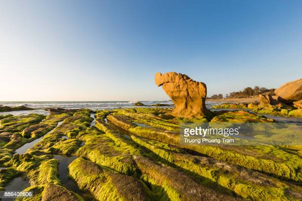Strange rocks and moss in the morning at Co Thach beach, Tuy Phong, Binh Thuan province, Viet Nam.
