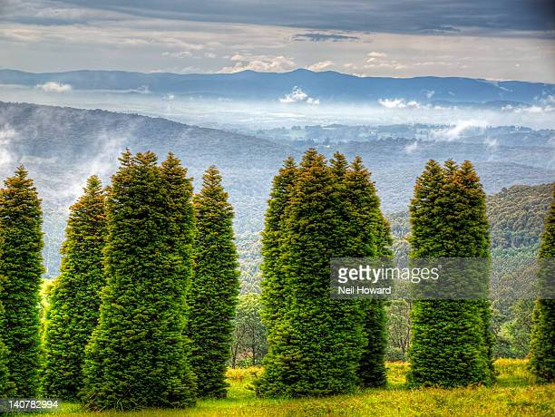 strange trees in front of cloudy mountains - dandenong stock photos and pictures