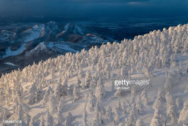 Strangely shaped snow covered trees nicknamed 'snow monsters' cover the slopes of Mount Zao on January 19 2019 near Yamagata Japan Mount Zao a 1841...
