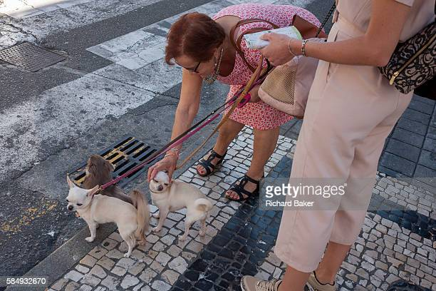 A stranger bends down to fondle another lady's pet chihuahua while waiting to cross the road on 21st July in Porto Portugal The poor pooch looks...
