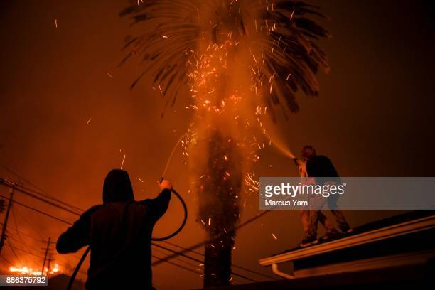 Strangers band together to help put out a palm tree on fire and stop it from burning homes as brush fire move to threaten structures on December 5...
