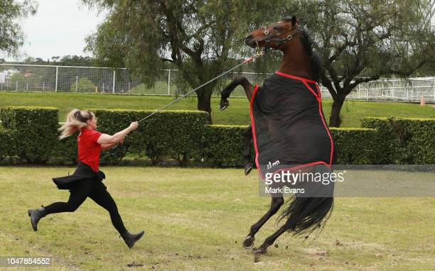 Strapper Christine Duffy tries to control Everest runner Redzel during an afternoon pick at Royal Randwick Racecourse on October 9 2018 in Sydney...