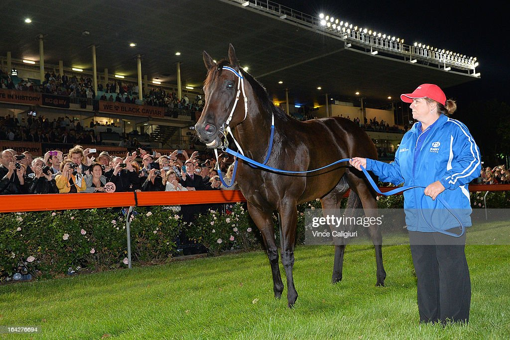 Strapper Donna Fisher with Black Caviar after she won her 24th straight win in the Hacer Group William Reid Stakes during Melbourne racing at Moonee Valley Racecourse on March 22, 2013 in Melbourne, Australia.