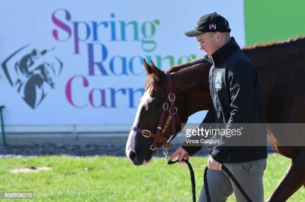 Strapper Matt Scown walks Admire Deus after a trackwork session at Werribee Racecourse on October 3 2017 in Melbourne Australia