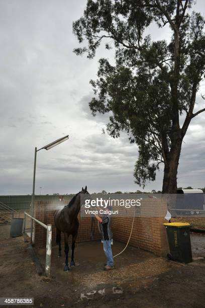 Strapper Paul Larter hosing down Belle Couture after finishing second in Race 3, the 3yr old fillies maiden plate during Bendigo Christmas Party Race...