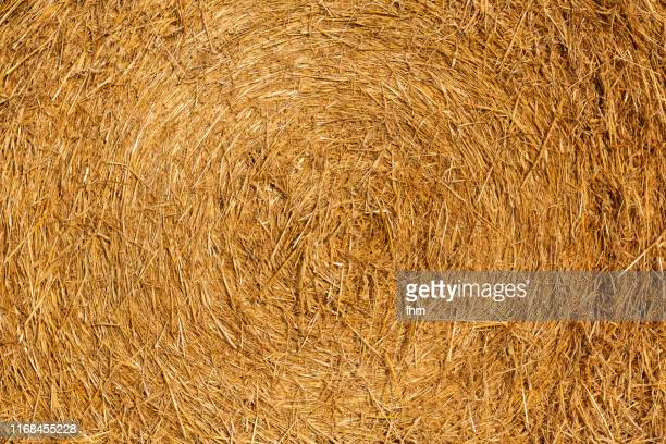 straw background - rye grain stock pictures, royalty-free photos & images