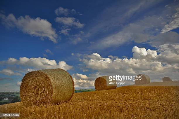 Straw baled close to Acton, Co Down Northern Ireland. Some of the little straw that made it to the bale in this country. Ground sodden under foot...