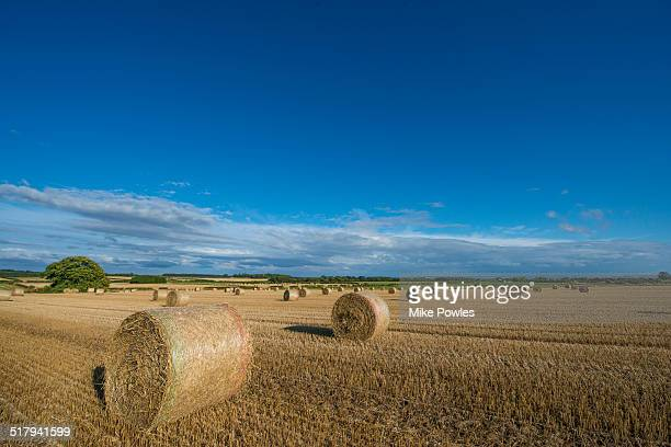 Straw bales at harvest time, Yorkshire