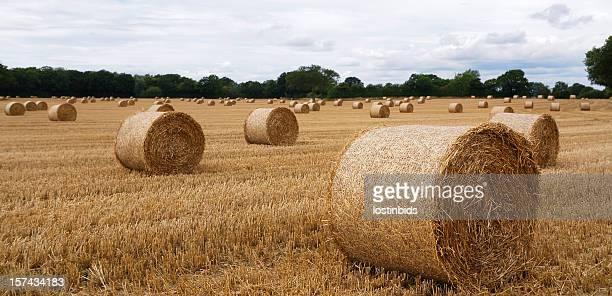 Straw Bales-Rolls nicht rechteckige