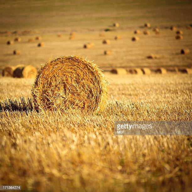 straw bales south africa - overberg stock pictures, royalty-free photos & images