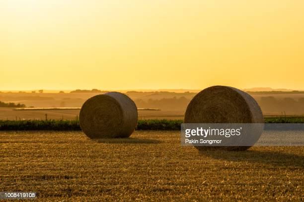 straw bales stacked in a field at sunset time - sec photos et images de collection