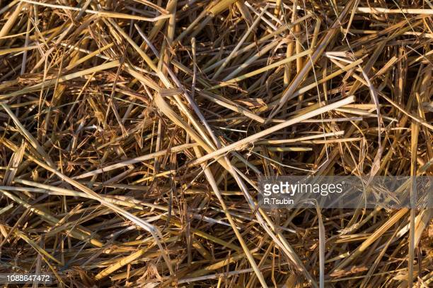 straw farmland summer fields as a background - as stock pictures, royalty-free photos & images