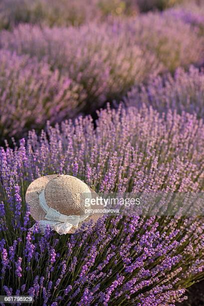 Straw hat in field of lavender